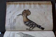 Historia Animalium 1551-1558