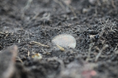 First of many coins excavated in the goalmouth - a 1966 coin.